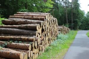Holz als Baustoff für ökologische Häuser